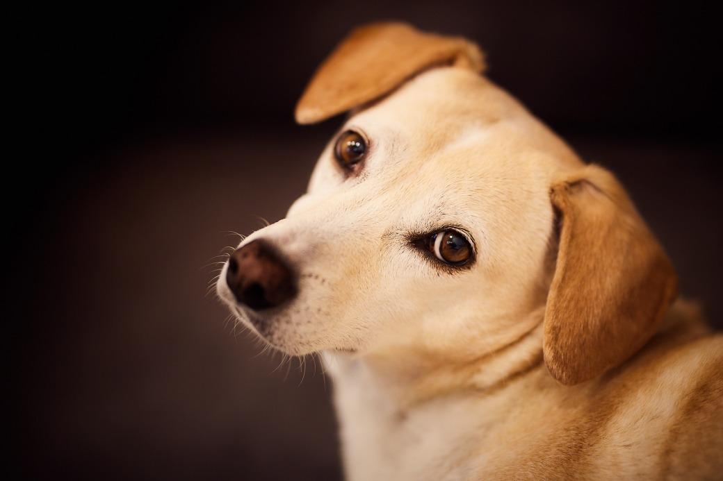 dog-3049615_1920
